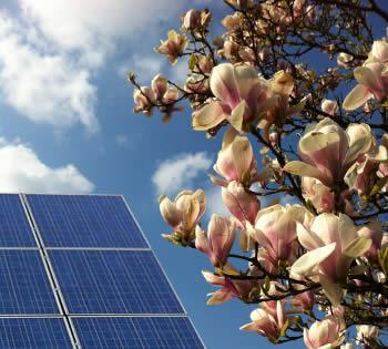 Photovoltaikmodule mit Magnolie im Frühling